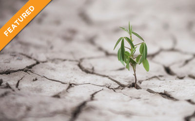 Change, Challenge, Adversity, and Resilience: Ideas and Tools for a Turbulent World